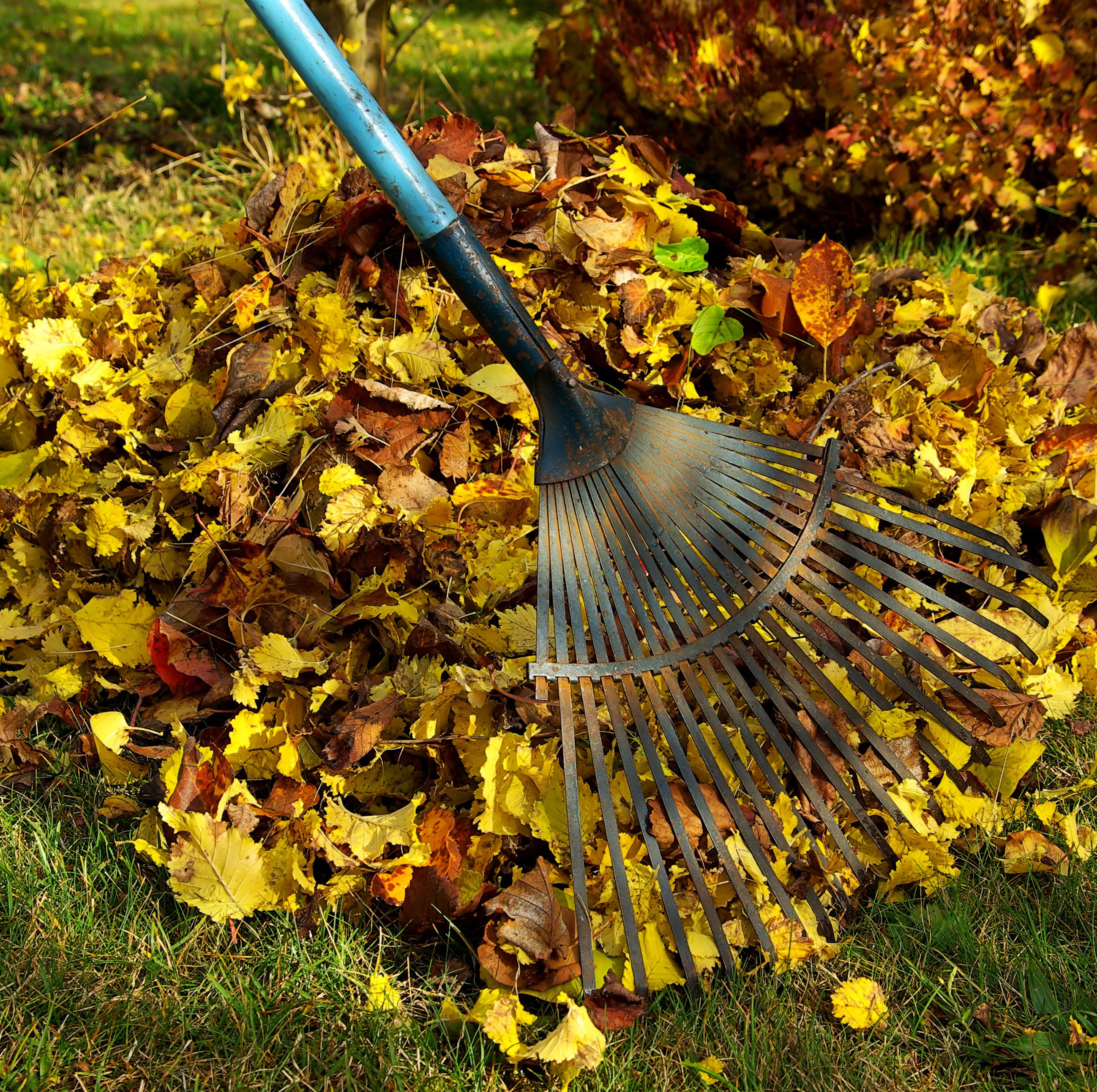 rake on pile of leaves