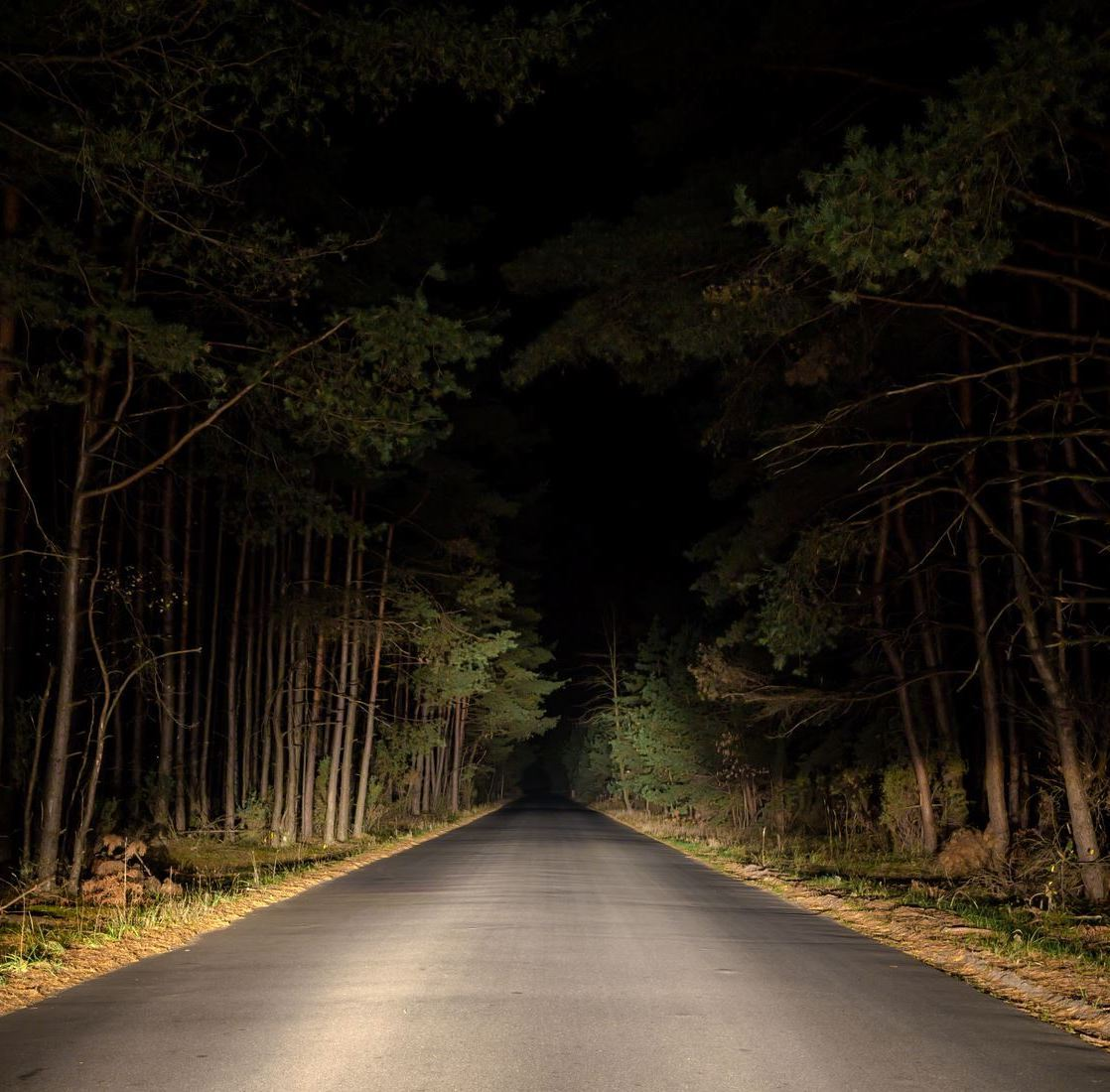 image of road surrounded by tress in the dark Opens in new window