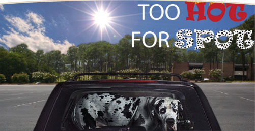 Too Hot for Spot Campaign