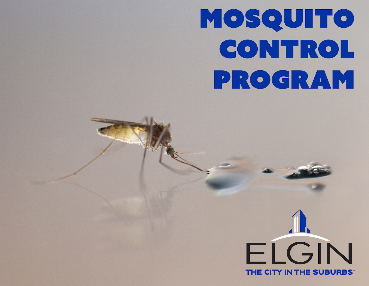 Mosquito Control Program